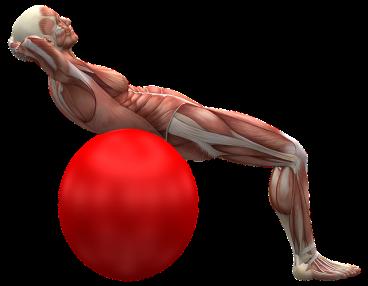 exercise-ball-2277451_640